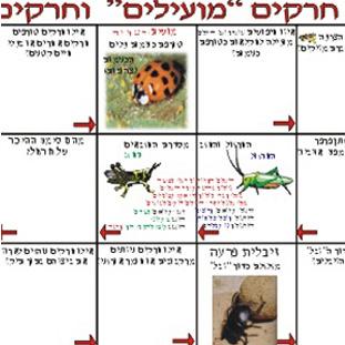 חרקים מועילים וחרקים מזיקים לכיתות ה-ח.משחקים לימודיים קבוצתיים לבתי ספר, וגם ללימוד פרטני