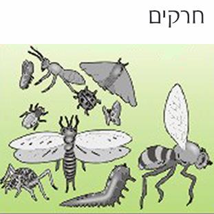 detailתמונה-לחרקים-לאתר משחקים לימודיים קבוצתיים וגם ללימוד פרטני וחוויתי בבית הספר