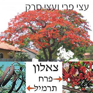 detailתמונה-לעצי-פרי-ועצי-סרק-לאתר משחקים לימודיים קבוצתיים וגם ללימוד פרטני וחוויתי בבית הספר