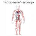 גוף האדם - ״מכונה מופלאה״