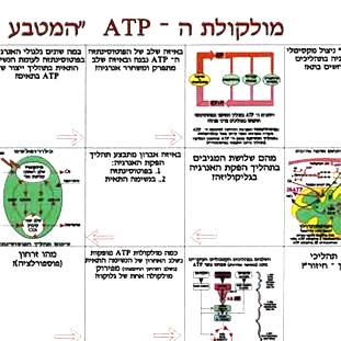 מולקולות -ATP.משחקים לימודיים קבוצתיים וגם ללימוד פרטני בבתי הספר