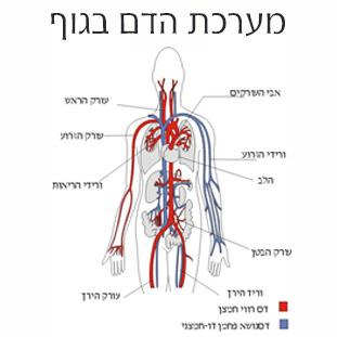 מערכת הדם בגוף