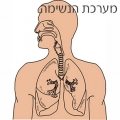משחק לימודי קבוצית בנושא מערכת הנשימה לכיתות ד-ו