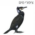 עופות מים בישראל. משחקים לימודיים קבוצתיים לבתי ספר, וגם ללימוד פרטני