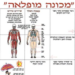 גוף האדם מכונה מופלאה