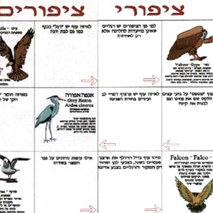 ציפורי ציפורים לכיתות ה-י. משחקים לימודיים קבוצתיים לבתי ספר, וגם ללימוד פרטני